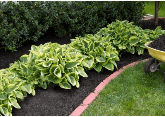 Bordure de jardin en pavé